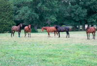 Airy Hill Stables, LLC